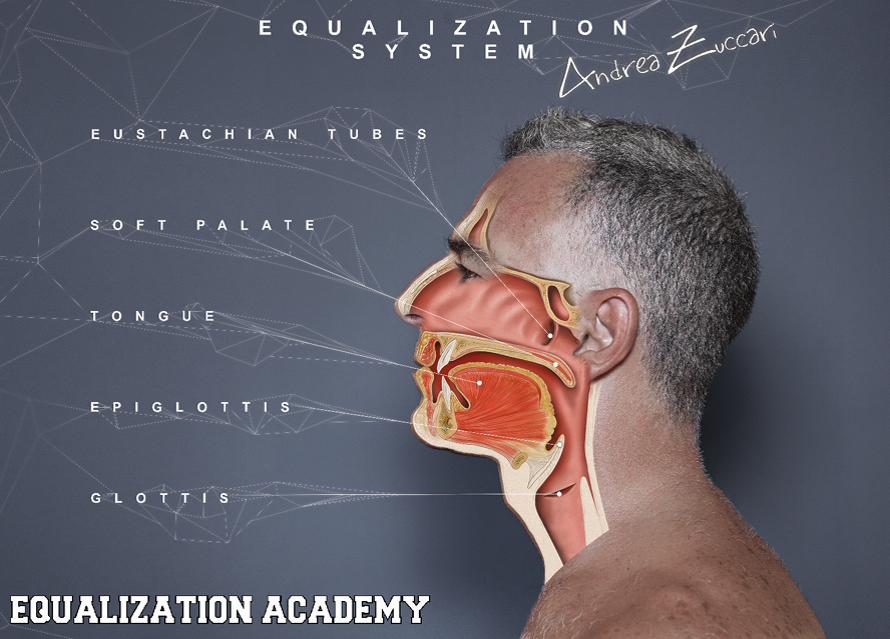 Wunderbar Medizinische Schule Makroskopische Anatomie Bilder ...